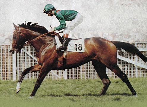 The Night They Stole a Racehorse